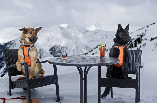 Dogs at the top of Kicking Horse Mountain Resort.