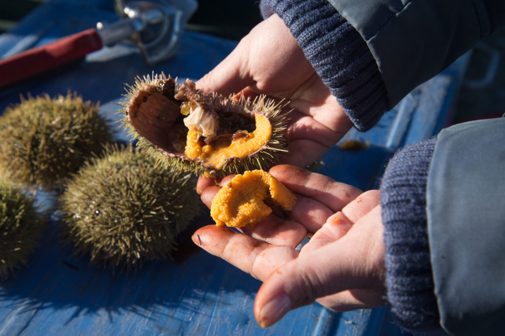 A sea urchin, a.k.a. uni. Image: Adrian Ng
