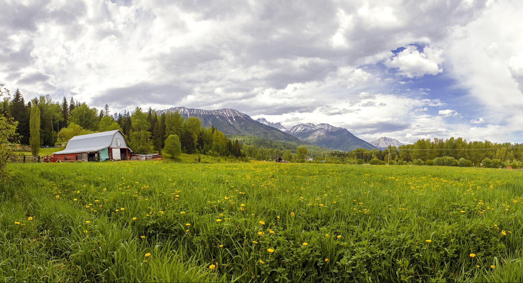 A tin roof barn sits at the edge of a lush meadow.