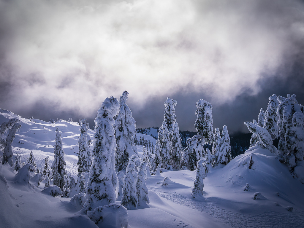 The trees becoming snow statues while looking down from the second peak of Mount Seymour.