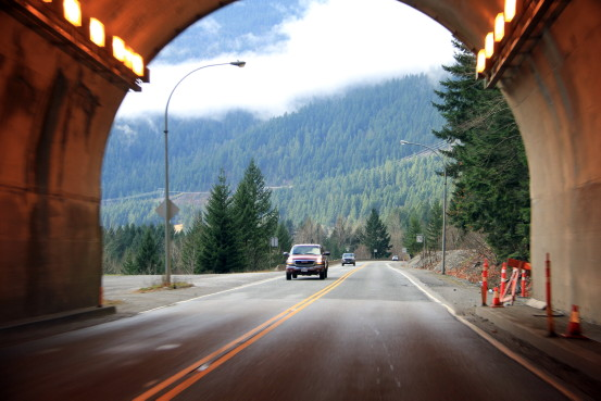 View of a dense forest upon exiting a highway tunnel.
