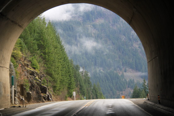 The view of a dense forest as you come out of a highway tunnel.