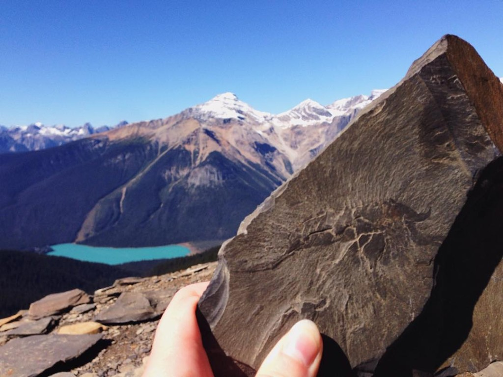 A 505 million year-old fossil in Yoho National Park's Burgess Shale. Photo: @meeshull via Instagram