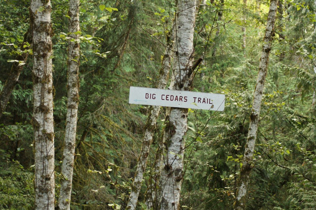 "A tree with a sign that reads ""Big Cedars Trail""."