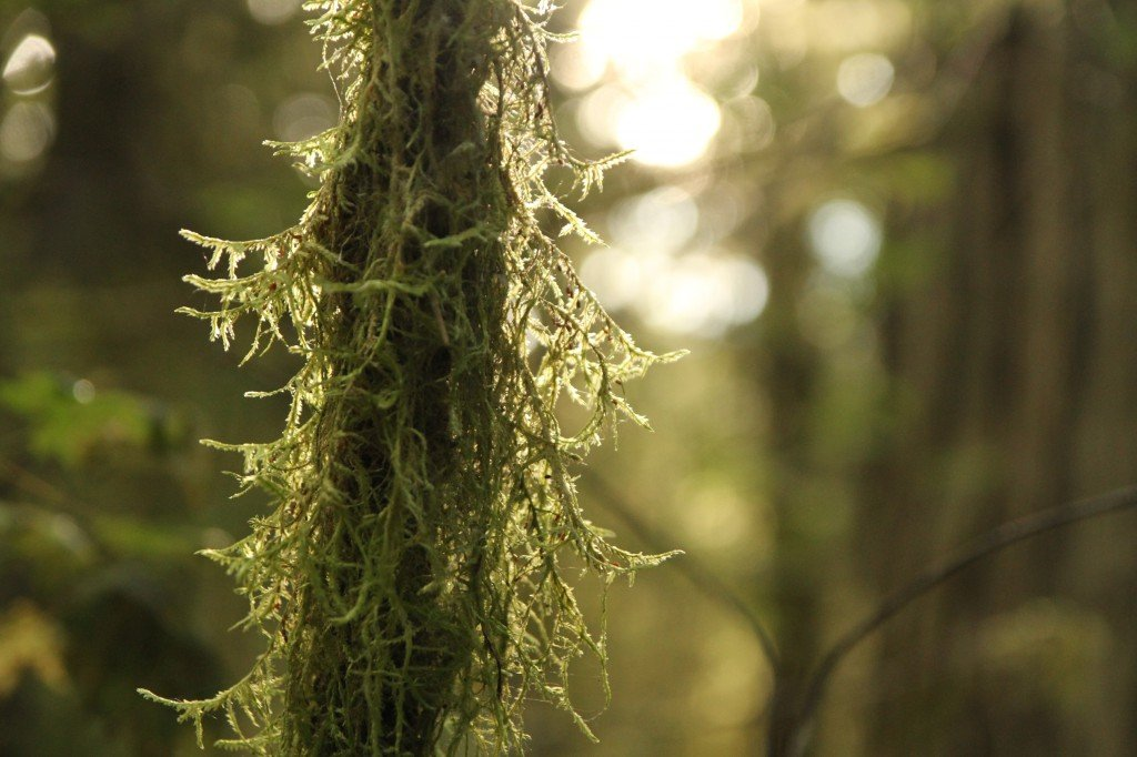 A small tree trunk covered in moss.