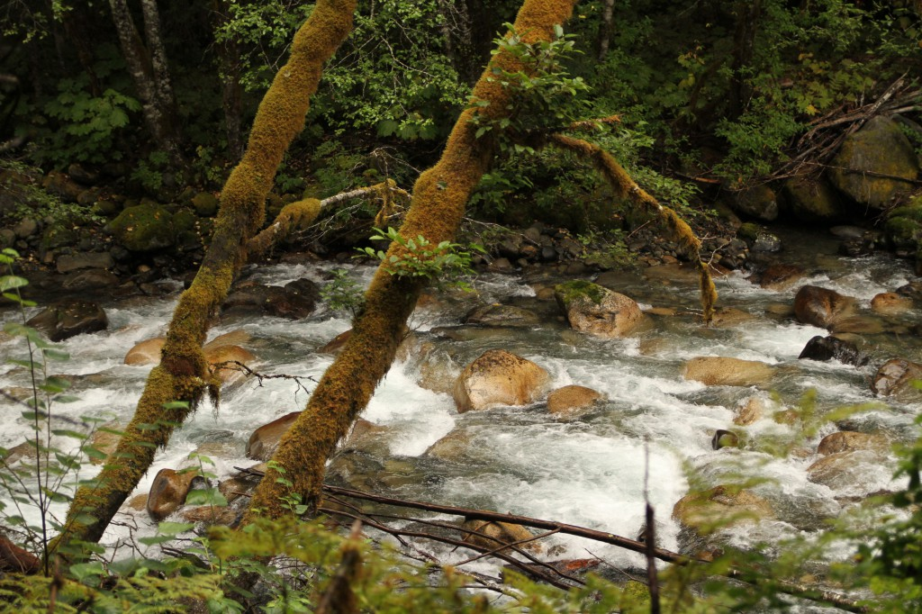 A rocky riverbank in the forest.