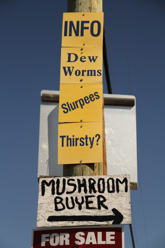 "Signs posted on a traffic pole that read ""Info, Dew, Worms, Slurpees, Thirsty?, Mushroom Buyer, and For Sale""."