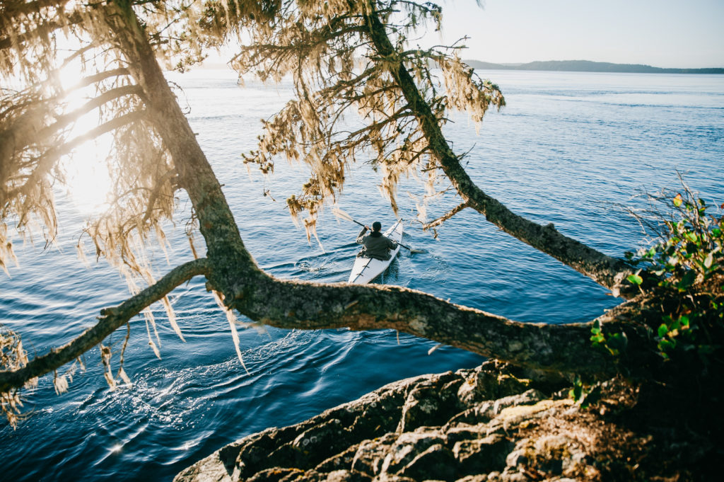 View of a kayaker between two trees, drenched in sunlight.