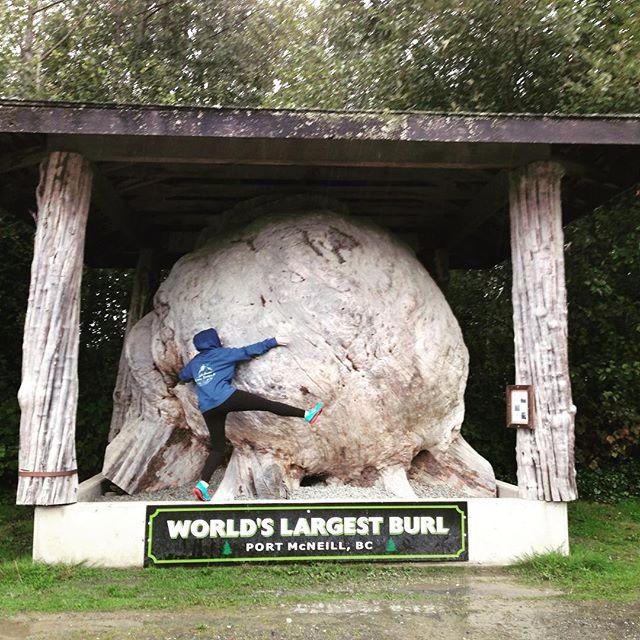 A woman hugs the World's largest burl—a natural tress formation.