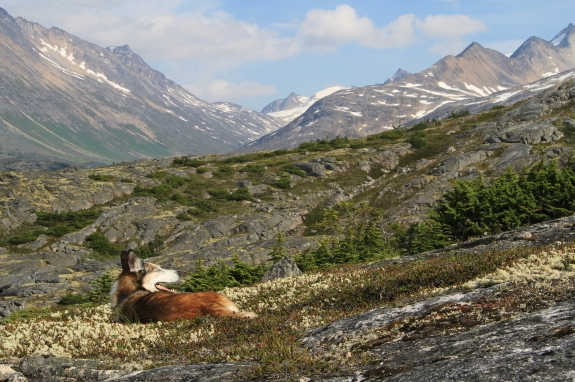 A dog relaxes in the low grass of a mountainous landscape.