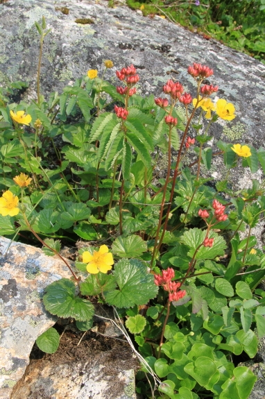 Blooming wildflowers in a rocky landscape.