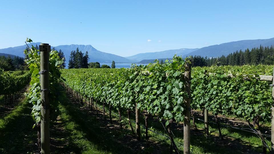 The vineyard views at Sunnybrae Vineyards and Winery in BC's Thompson Okanagan.