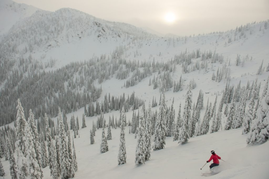A woman navigates a ski slope dotted with snow-covered trees.