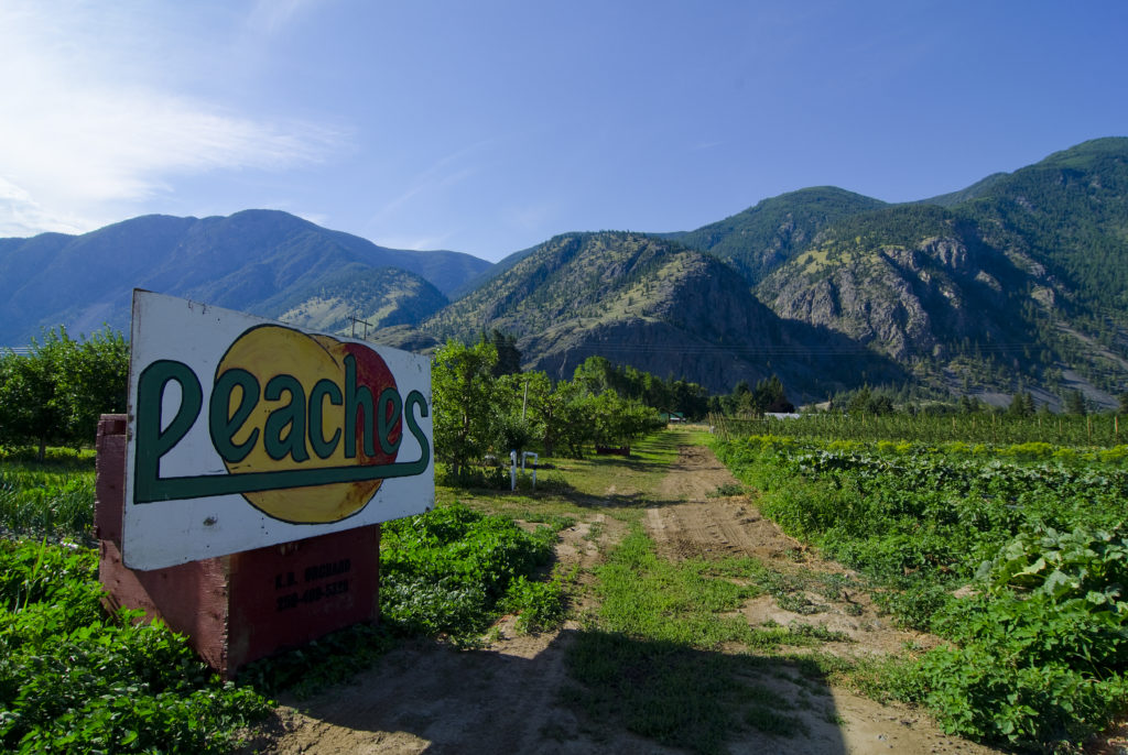 Orchards in Keremeos.
