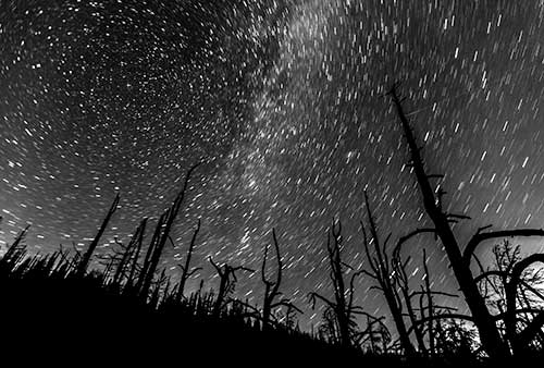 Starlit night from a burnt forest
