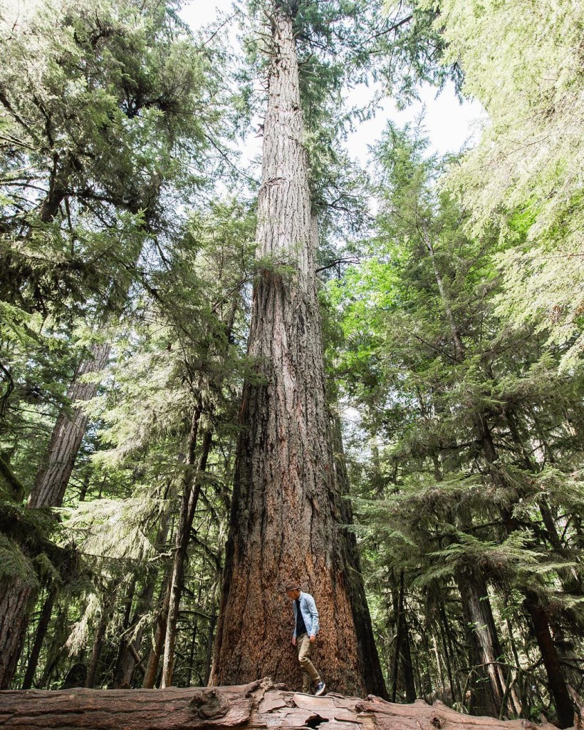 A man stands in a forest, next to an impossibly tall tree.