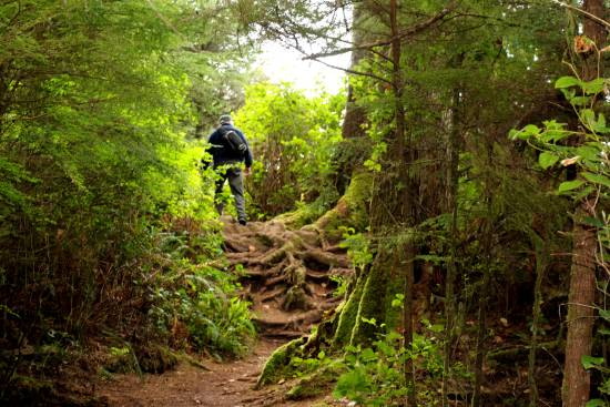 A hiker walking through a trail of dense green forest toward Sandcut Beach.