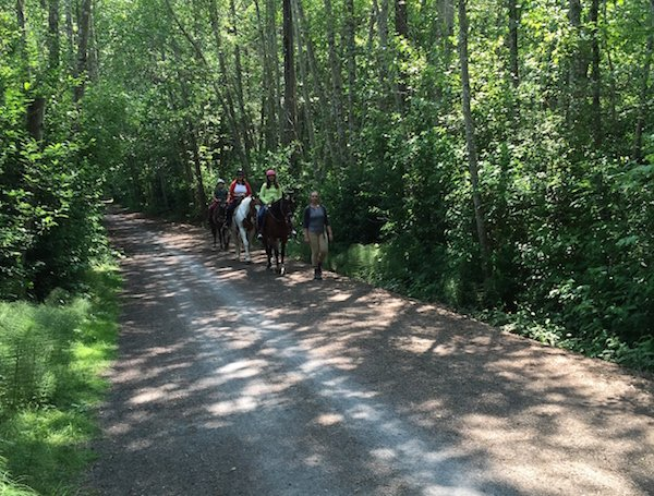 Three people riding horses toward the camera on the Lochside Regional Trail in Victoria, with one person walking beside the horses and dense green trees along both sides of the path.
