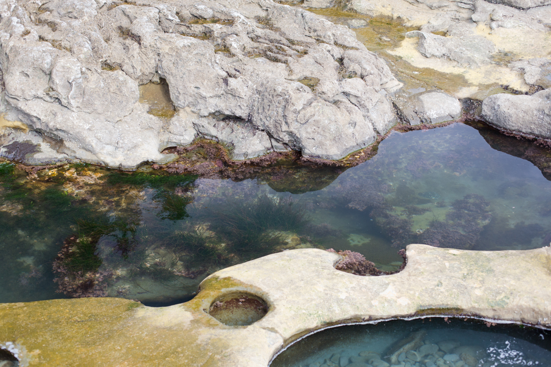 Tide pools at Botanical Beach, Port Renfrew on Vancouver Island
