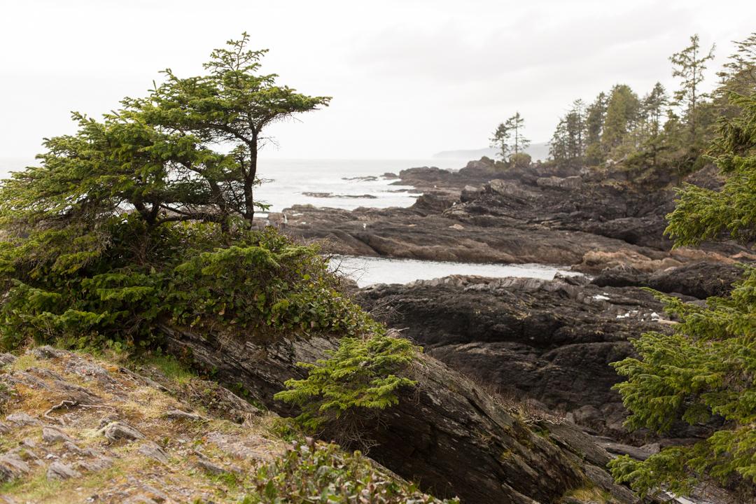Botanical Beach, Port Renfrew, on Vancouver Island