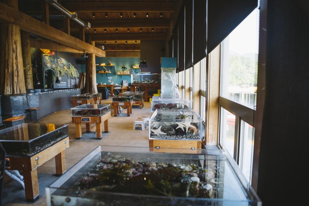 Ucluelet Aquarium | Tourism Vancouver Island/Ben Giesbrecht