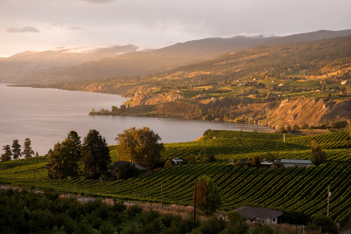 A vineyard on a lake with rolling hills beyond.