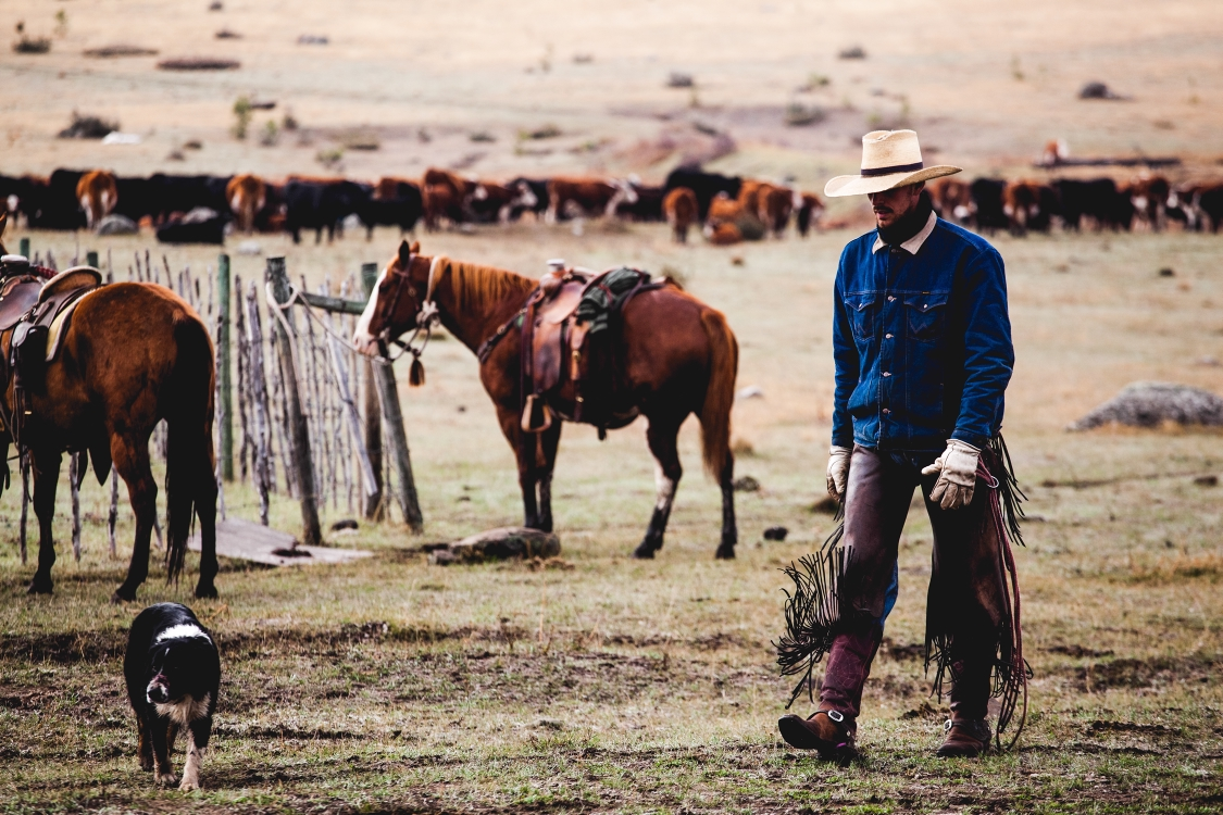 A cowboy walking with his dog with a field of cattle in the background.