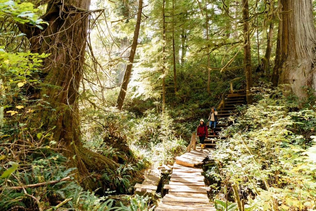 Big Tree Trail on Meares Island | Jeremy Koreski