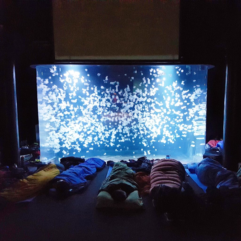 People in sleeping bags in front of a display at the Vancouver Aquarium