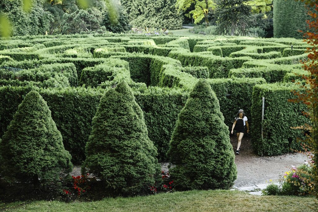 The Elizabethan maze at VanDusen Botanical Garden in Vancouver.