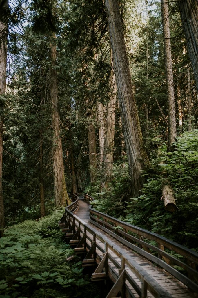 Ancient Forest Boardwalk | Jongsun Park